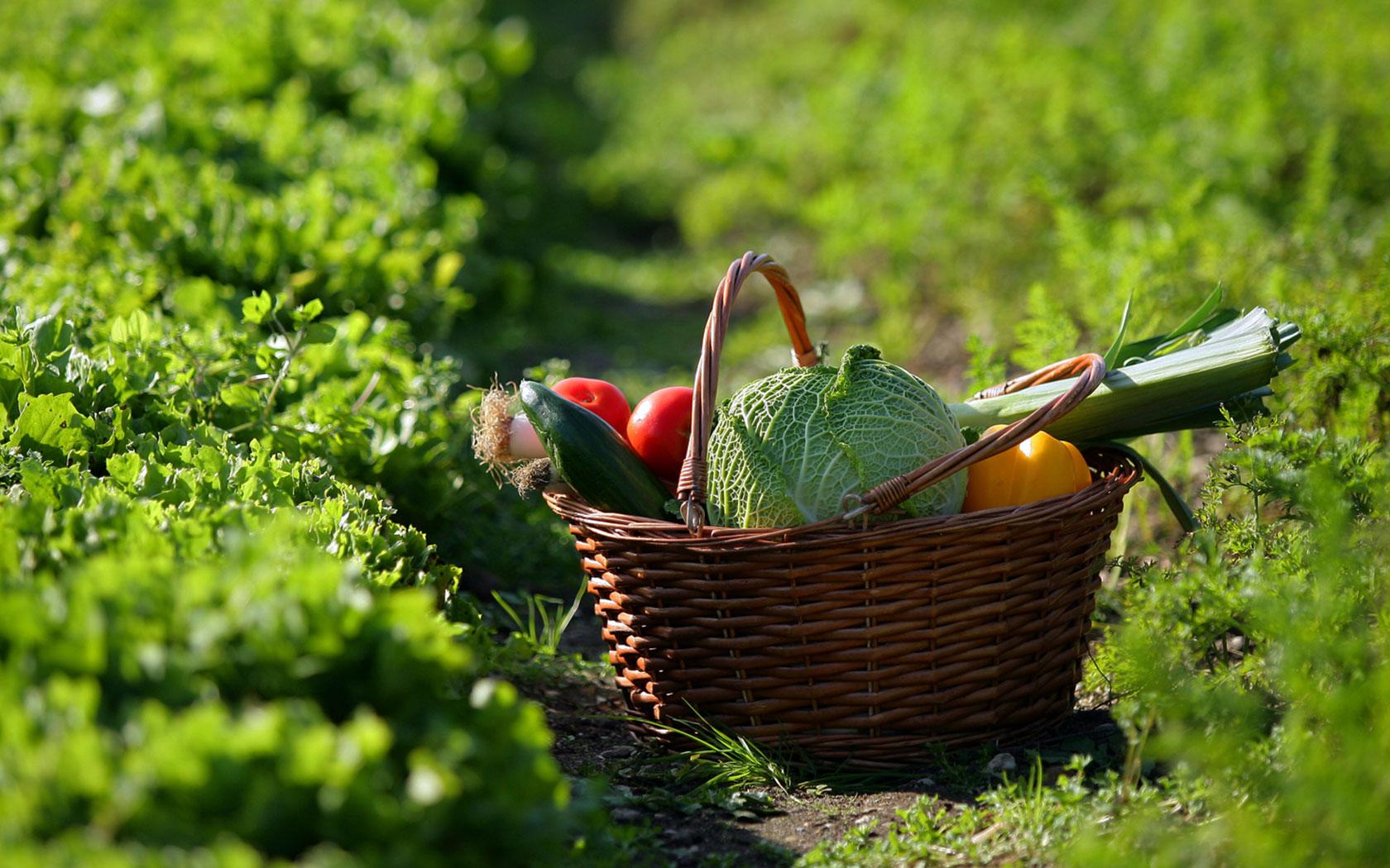 Descobreix el món de les proteïnes vegetals a la cuina de tardor