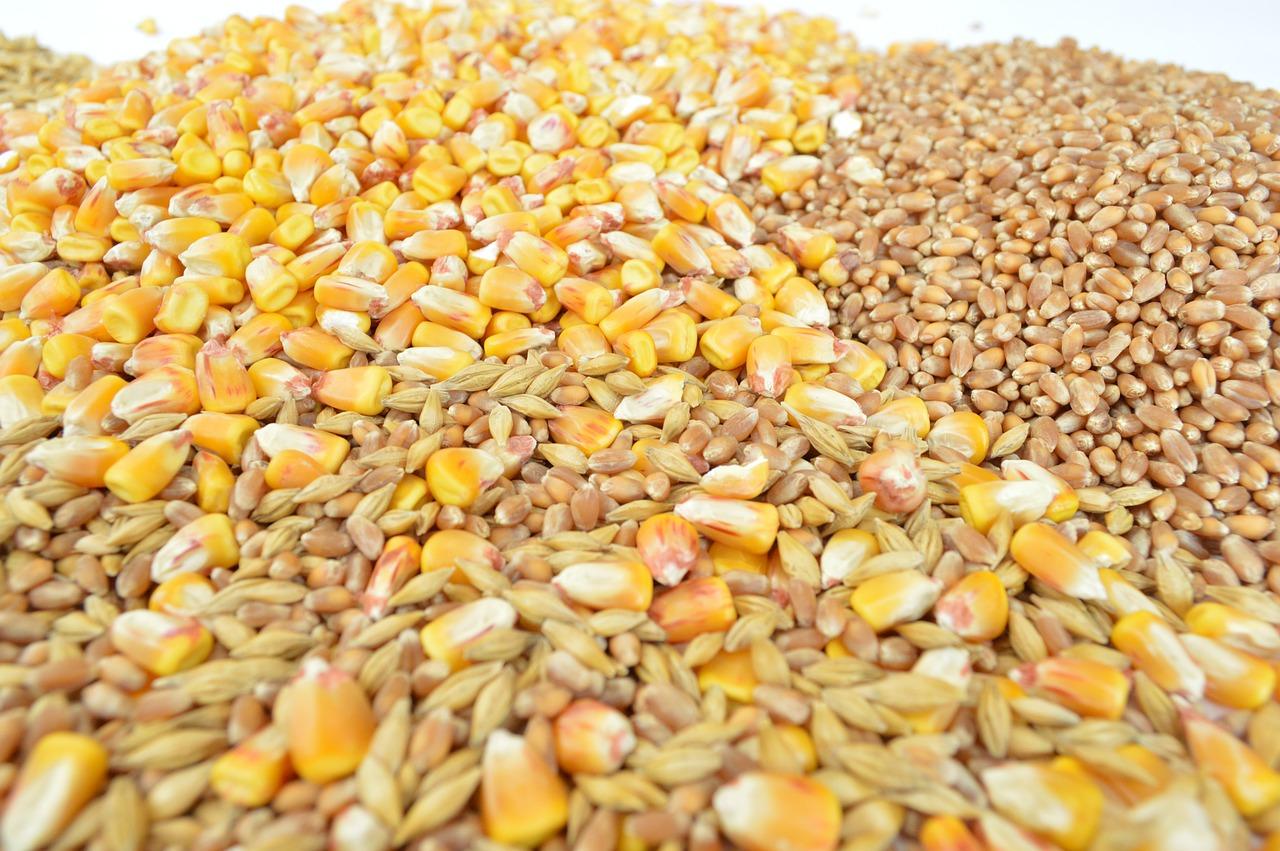 Taller de Cereals – Tardor/Hivern